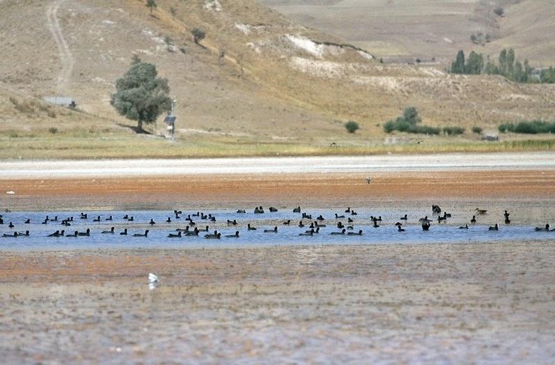 دریاچه قوریگل