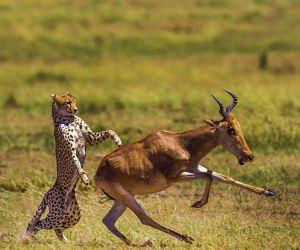 پارک ملی توران,پارک ملی توران در شاهرود,تصاویر منطقه حفاظت شده توران