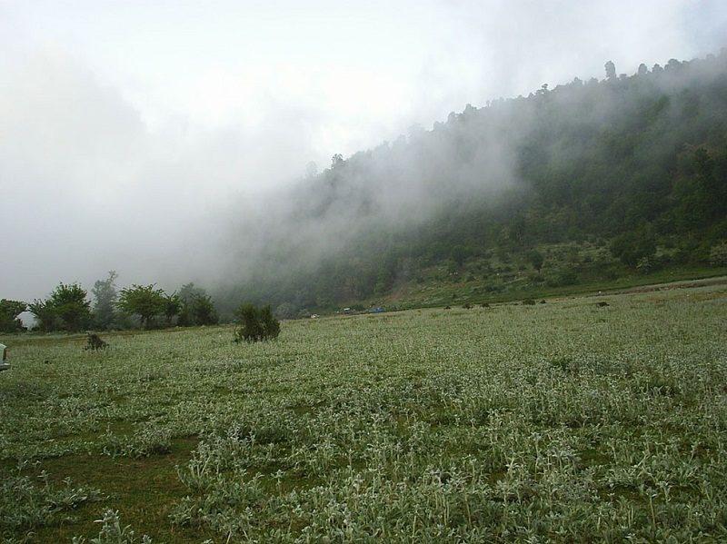 جنگل اولنگ کجاست,عکس جنگل اولنگ