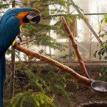آدرس باغ پرندگان کرج,باغ پرندگان چهارباغ کرج,باغ پرندگان در کرج