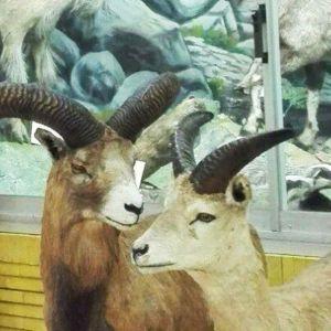 آدرس موزه حیات وحش تبریز,عکس های موزه تاریخ طبیعی تبریز,موزه تاریخ طبیعی