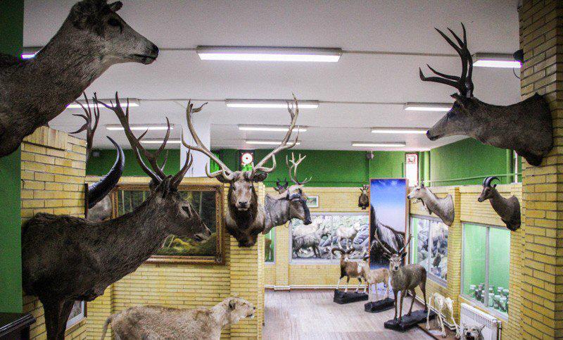 موزه ی تاریخ طبیعی تبریز