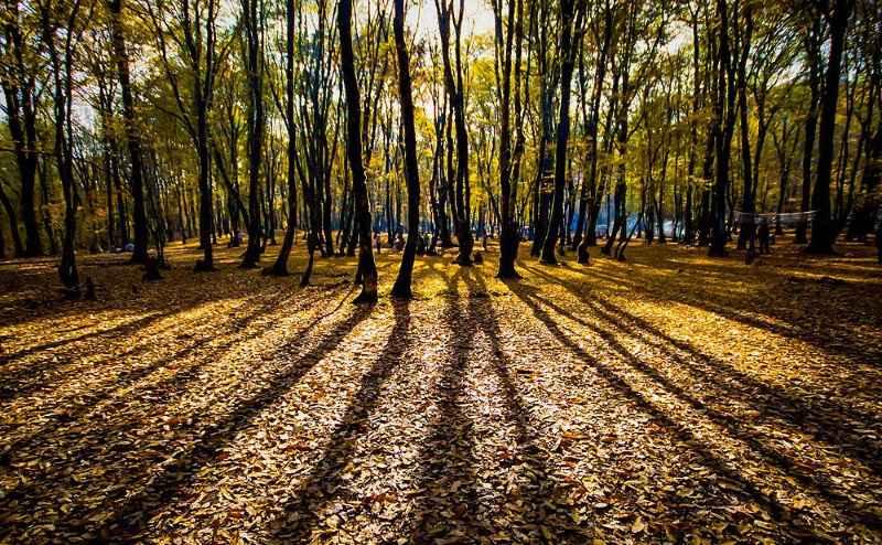 پارک جنگلی النگدره گلستان,تصاویر پارک جنگلی النگدره,جاذبه های گردشگری گلستان