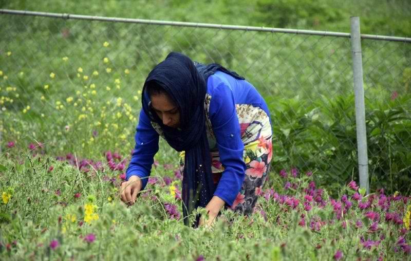 باغ گیاهان دارویی ابوعلی سینا,باغ گیاهان دارویی بوعلی سینا در همدان,باغ گیاهان دارویی همدان