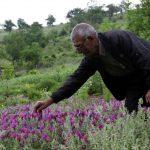 باغ گیاهان دارویی بوعلی سینا همدان