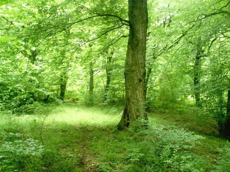 پارک جنگلی دلند استان گلستان,پارک جنگلی دلند گرگان,پارک جنگلی دلند گلستان