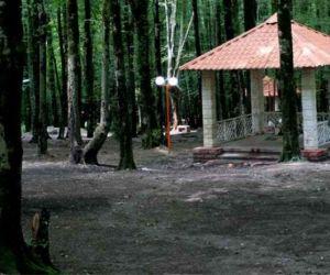 پارک جنگلی امام رضا,پارک جنگلی امام رضا در کردکوی,پارک جنگلی امام رضا کردکوی