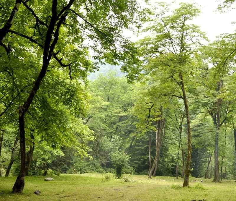 جنگل پلنگ دره سوادکوه,جنگل پلنگ دره شیرگاه,جنگل پلنگ دره کجاست؟