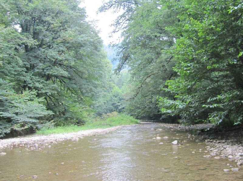 جنگل های پلنگ دره,عکس جنگل پلنگ دره,مسیر جنگل پلنگ دره