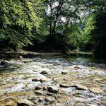 جنگل پلنگ دره مازندران