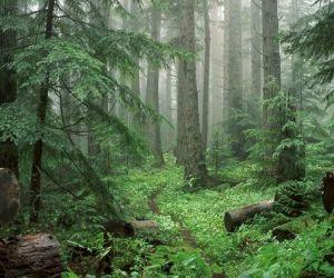 پارك جنگلي سي سنگان,پارک جنگلی در سی سنگان,پارک جنگلی سی سنگان مازندران