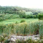 روستای ونایی لرستان