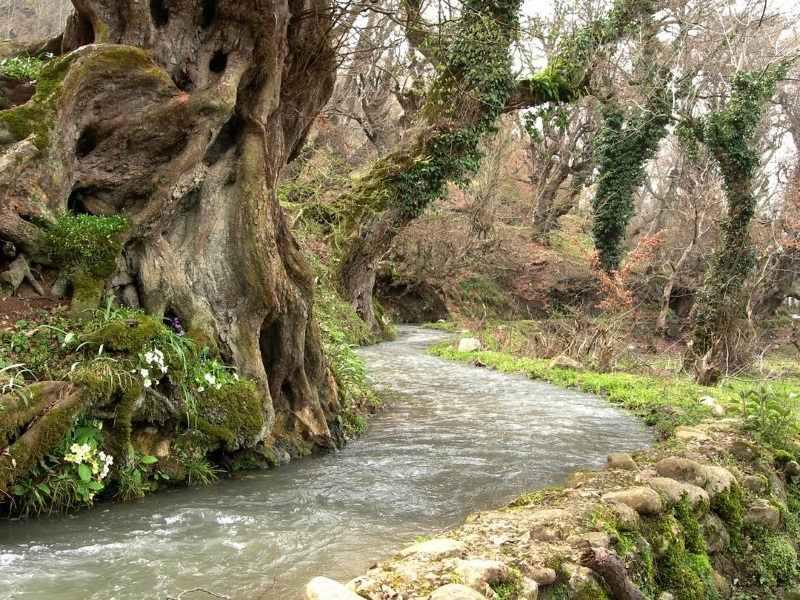 شیرین رود سوادکوه