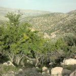 جاذبه های گردشگری استان فارس,کوه برز و منطقه سیاهچال,منطقه سیاهچال