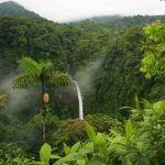 جنگل های هیرکانی برای ثبت جهانی در یونسکو