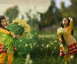 آدرس دشت نرگس بهبهان,دشت گل نرگس بهبهان,دشت نرگس در بهبهان