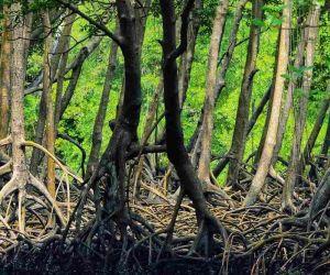 آدرس جنگل حرا چابهار,جنگل حرا چابهار,جنگل حرا در قشم