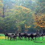 آدرس پارک جنگلی قرق,پارك جنگلي قرق,پارک جنگلی قرق تالش