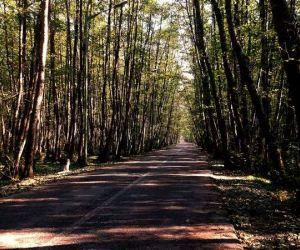 آدرس جنگل گیسوم,پارک جنگلی گیسوم گیلان,جنگل گيسوم گيلان