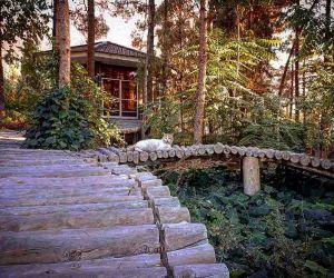 ادرس جنگل پردیسان قائم کرمان,پارک پردیسان کرمان,پارک جنگلی پردیسان قائم