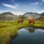 پارک پیرین بلغارستان,پارک پیرین در بلغارستان,پارک ملی پیرین